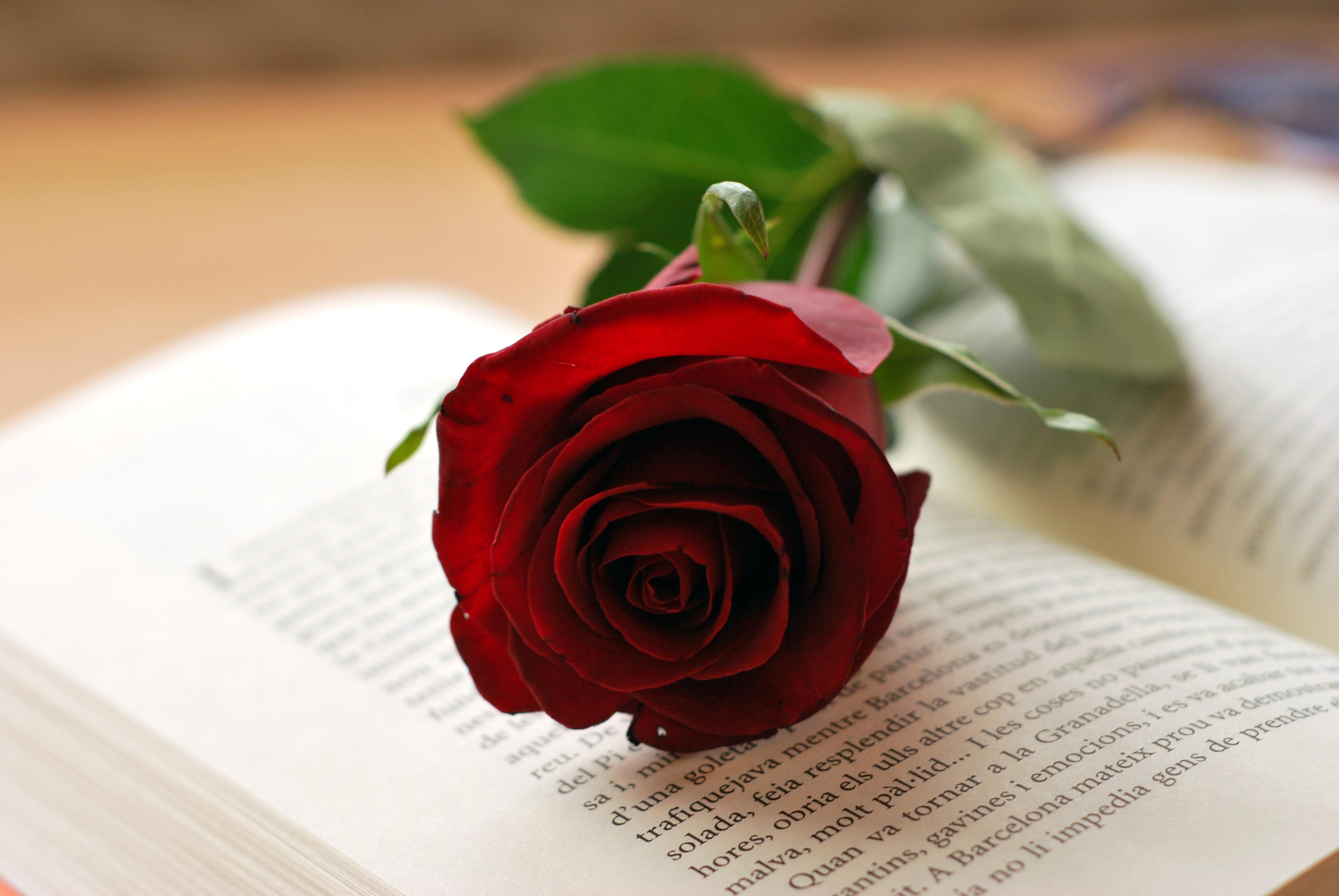 Rosa-i-llibre-Sant-Jordi-copia.jpg